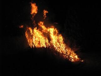 fire-5675.jpg
