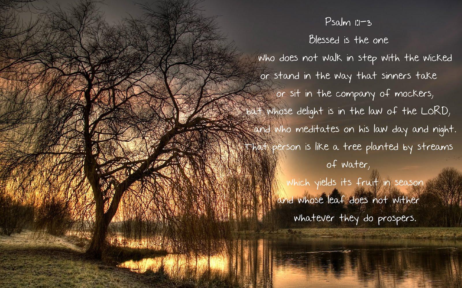 Reflection on Psalm 1 | New Life Narrabri